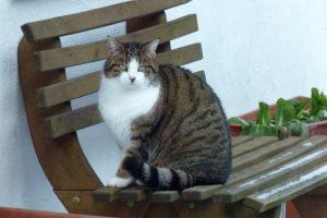 Unsere Katze Paula auf der Bank