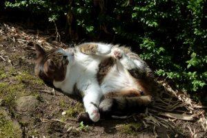 Unsere Katze Paula fühlt sich wohl und streckt ihren Bauch in die Sonne