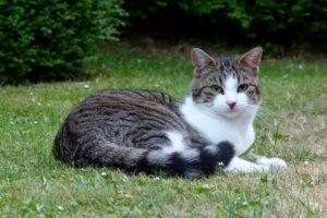 Unsere liebe Katze Paula