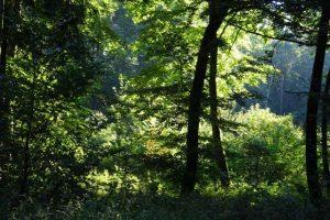 Der Wald ist ein wunderbarer Erholungsraum