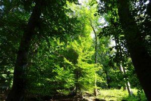 Ein Spaziergang im Wald ist gut für Körper und Seele