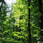 Waldspaziergang im Sommer — Lebenswege
