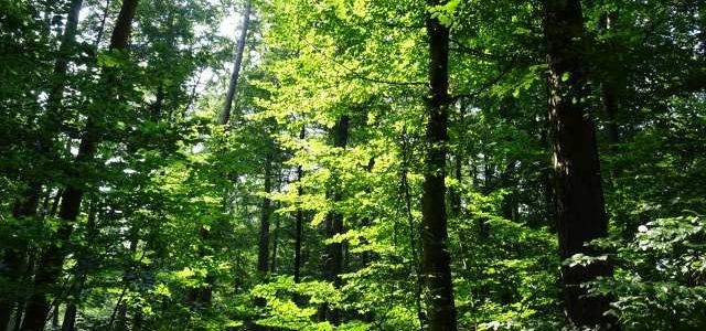 Im Sommer ist es im Wald wunderschön