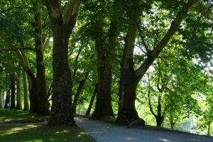 Allee mit alten Bäumen auf der Insel Mainau