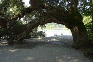 Ein besonderer Durchblick auf der Insel Mainau