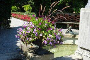 Blumenschale auf der Insel Mainau in lila