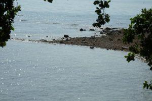 Das Wasser des Bodensees glitzert in der Sonne