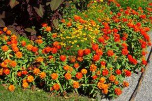 Blumen in gelb und orange leuchten auf der Insel Mainau in der Sonne