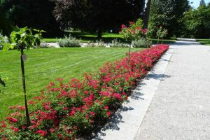 Italienischer Rosengarten auf der Insel Mainau