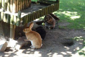 Kaninchen auf der Insel Mainau beim Bauernhof