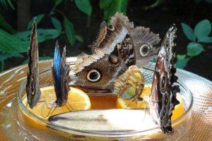 Schmetterlinge Futterstelle Schmetterlingshaus Insel Mainau