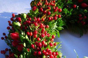 Verarbeitet werden grüne Zweige und große und kleine Hagebutten