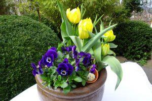 Wunderschöne gelbe Tulpen mit lila Hornveilchen dekoriert mit Moos, Tontöpfchen und Wachtelei