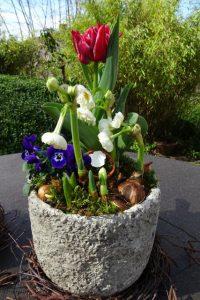 Dekoration Frühling mit Tulpen, gefüllten kleinen Narzissen und Hornveilchen bepflanzter Topf