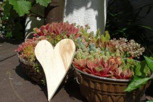 Dekoration für draußen Holzherz und Sukkulenten